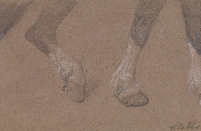 George Stubbs: The legs of a draught-horse